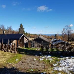 Gärdsgård med viktig funktion vid fäbodar i Härjedalen.