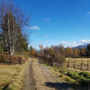Fäbodbruk i Hede med gärdsgård som viktig funktion.