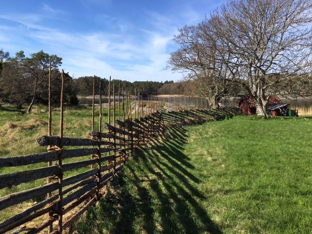 Restaurerad gärdsgård med nya stör och återvunna slanor.