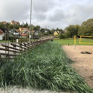 Sjöängsparken, gärdsgård i offentlig miljö