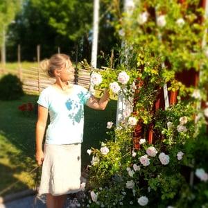 Trädgårdstorpet rosen New Dawn o Stina_1000x1000