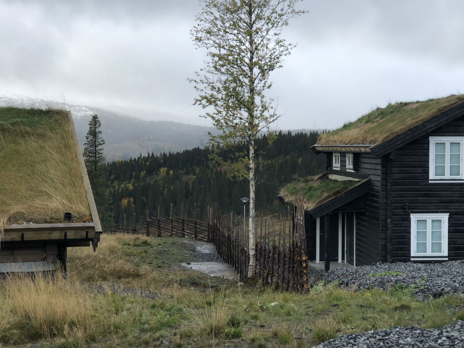 Genuint staket i fjällmiljö, gärdsgård Åre.
